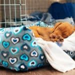 Should You Cover A Dog Crate With A Blanket?