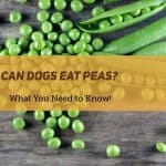 Can Dogs Eat Peas: What You Need To Know